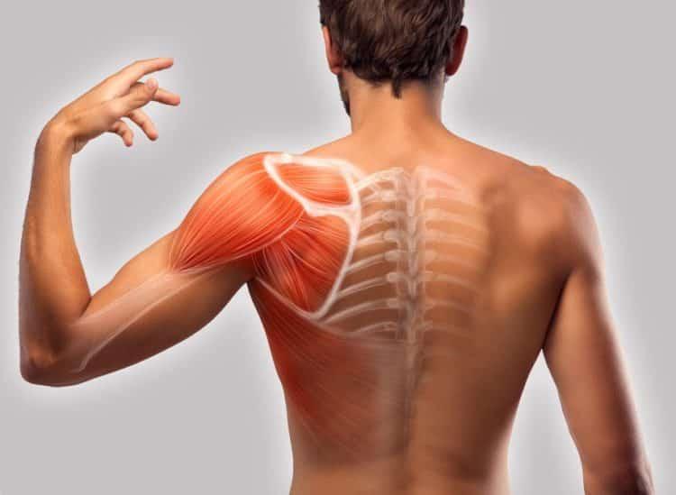 Localisation d'une douleur musculaire au dos