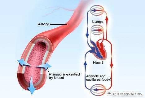 Illustration de la pression artérielle