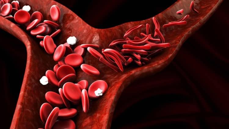 Globule rouges dans un vaiseau sanguin
