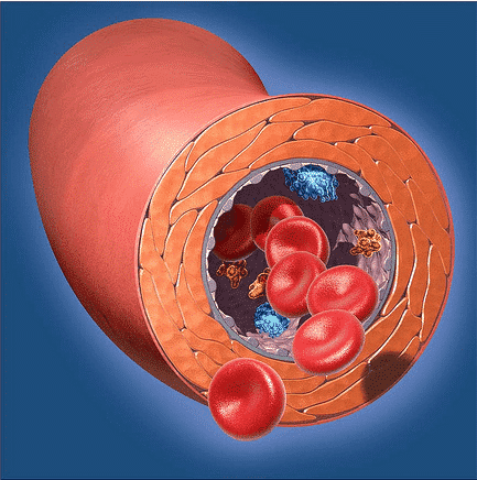 Un vaisseau sanguin