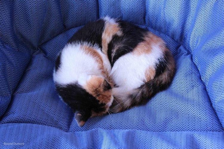 Un chat qui dort!