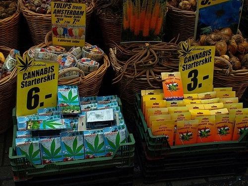 Le cannabis, déja connue pour son utilisation contre le cancer, pourrait avoir d'autres indications thérapeutiques dans le future. Image copyright © 2008 Javier Carcamo