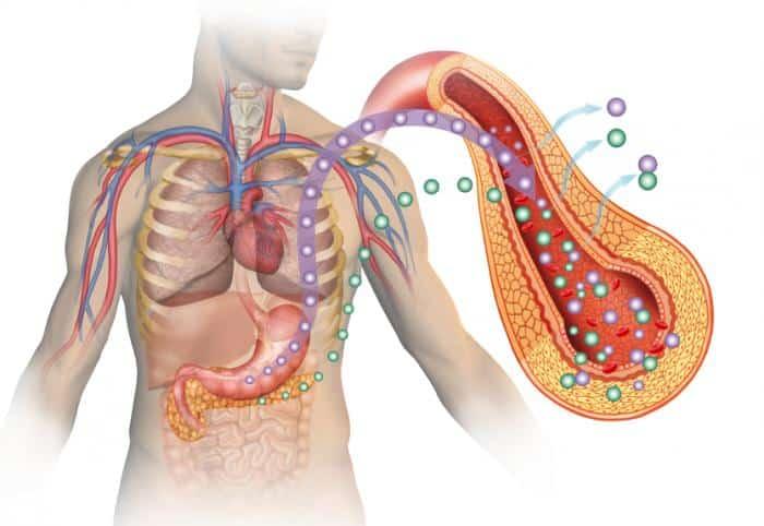 Mécanisme du diabète